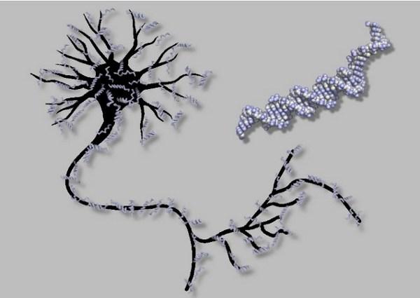 DNA tabanlı yapay sinir ağıyla deney tübünde ilkel beyin üretildi – Video