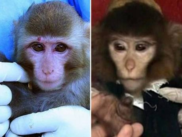iran-uzay-maymun