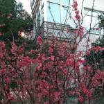 nokia-lumia-1520-kamera-fotograflari-00018