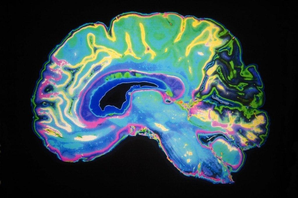 beynin duygu merkezi