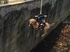 Video: Mühendis modifiye edilmiş drone ile yavru köpeği kurtardı